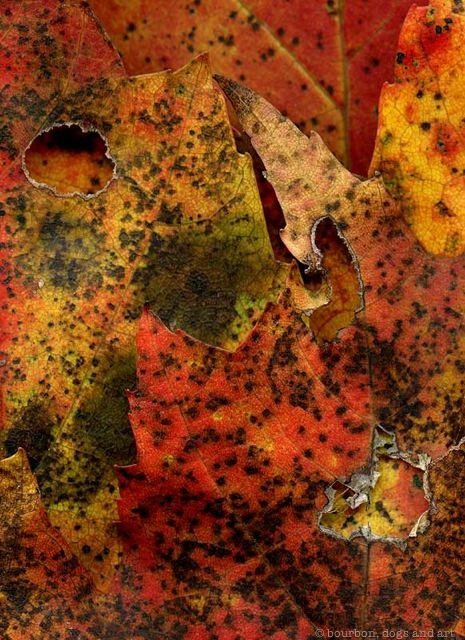 Leaves After de Kooning (Willem)
