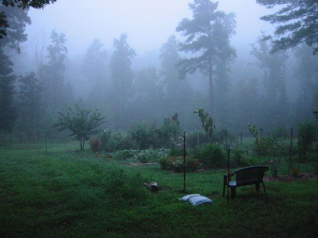 Summer Fog and the Garden